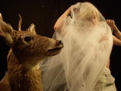 Genesis_and_deer